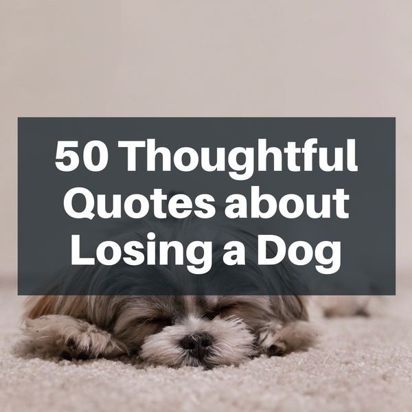 50 Thoughtful Quotes about Losing a Dog | Pawjoy