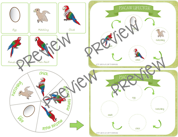 Macaw Life Cycle Printables Mini Pack