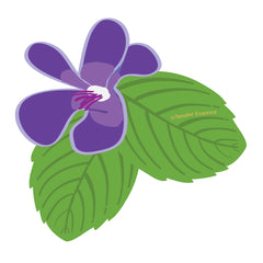 Violet Leaf illustration