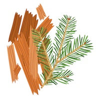 Cedarwood essential oil graphic