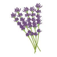 Lavender illustration essential oil