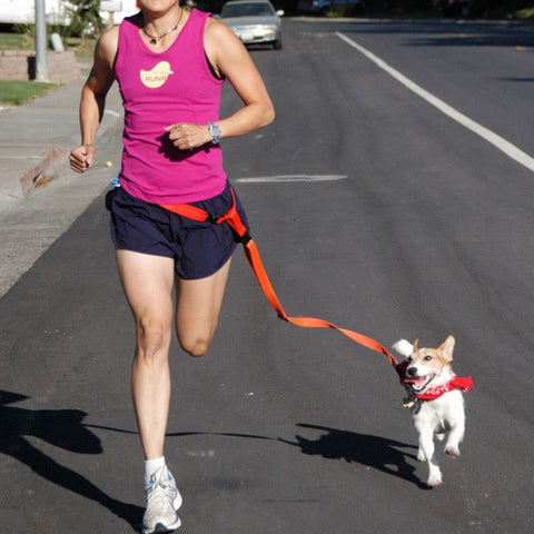 NEW Hands Free Dog Leash.Great for Runners...