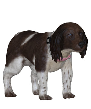German Shorthaired Pointer Kurzhaar