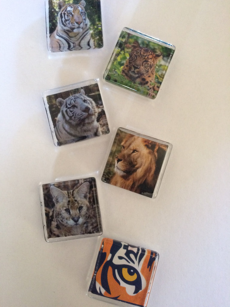 Featured Item of the Week - Six Piece Magnet Set