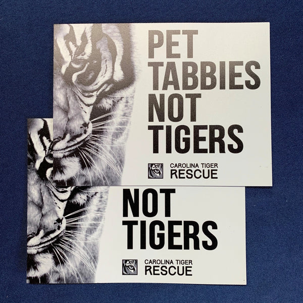 Pet Tabbies Not Tigers Car Magnet
