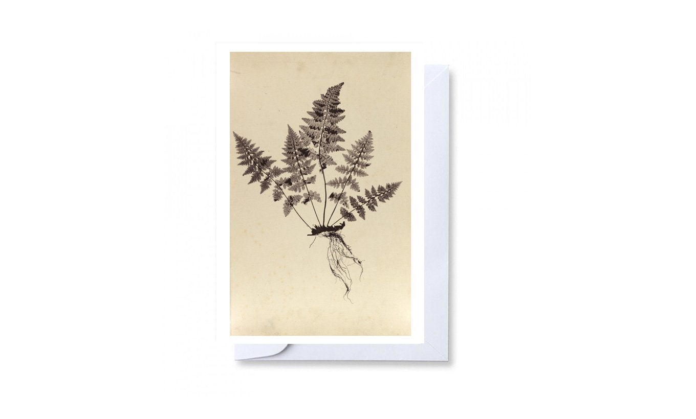 Glaisher Dickie's Fern Greetings Card