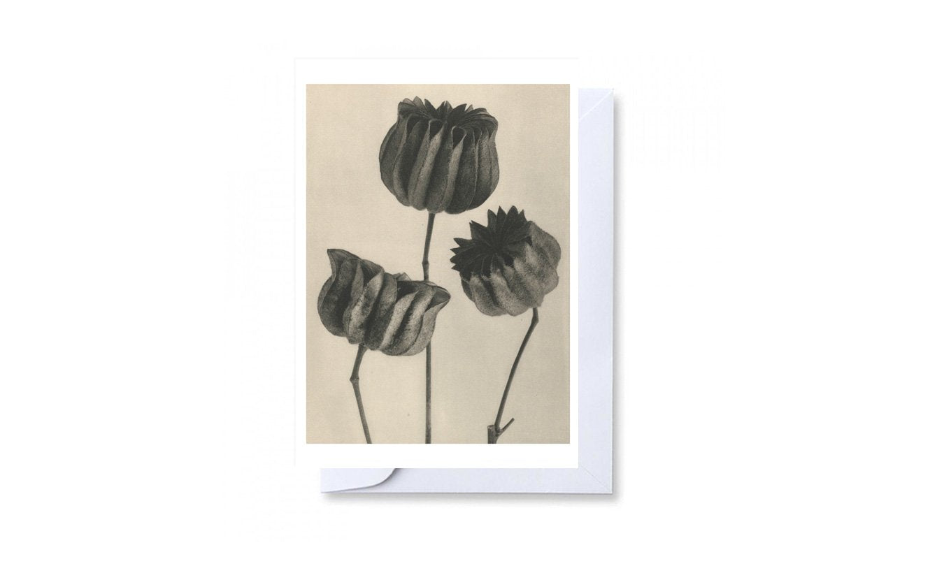 Karl Blossfeldt Abutilon Greetings Card