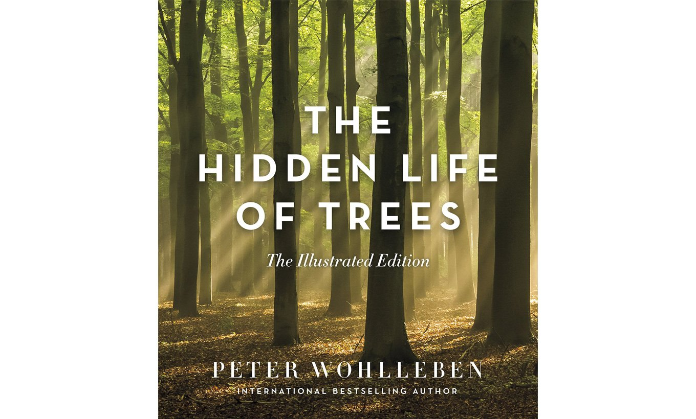 The Hidden Life of Trees Illustrated Edition