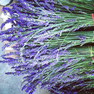 Bundle of Dry Lavender