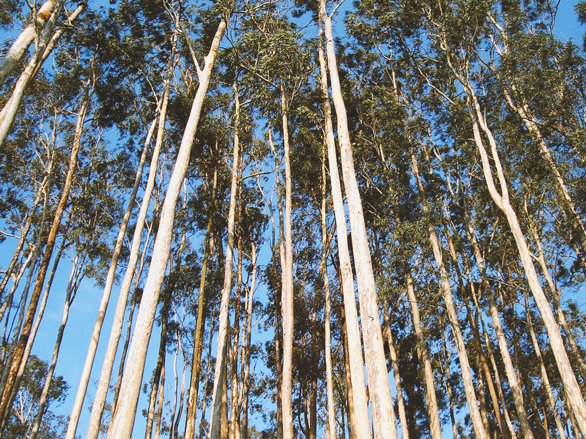 Eucalyptus Forest TENCEL