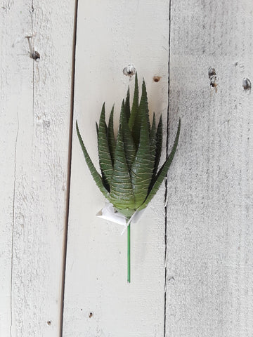 Green & White Succulent