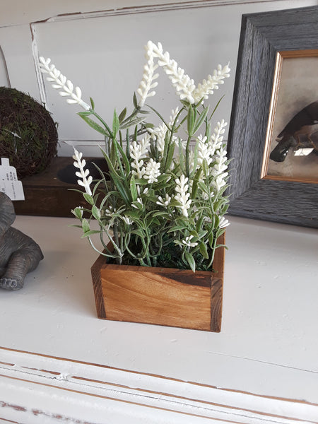 Lavender in Wood Box