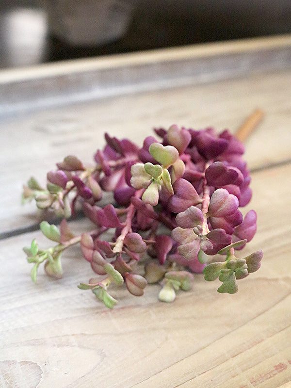 Purple and Green Succulent Branch