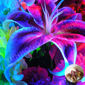 2pcs Rare Blue Lily Bulb, Not Lily Potted Plant