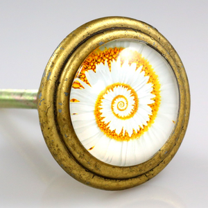 Orange and white nautilus shell artwork under glass inlay set in solid brass knob