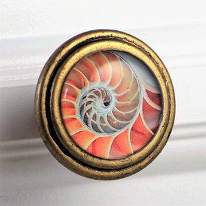 round brass knob with Pink Nautilus Shell artwork under glass