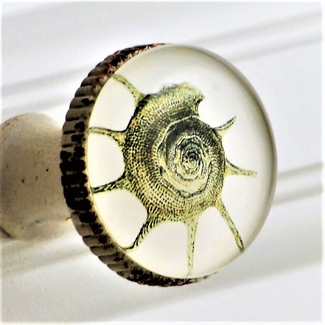 Retro Whitewashed Metal Knob – Spiny Conch