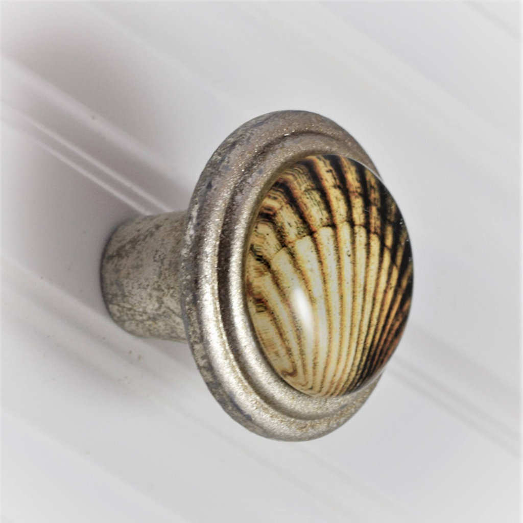 Brushed Silver Knob - Scallop Shell
