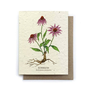 Echinacea Greeting Card | Bower Studio