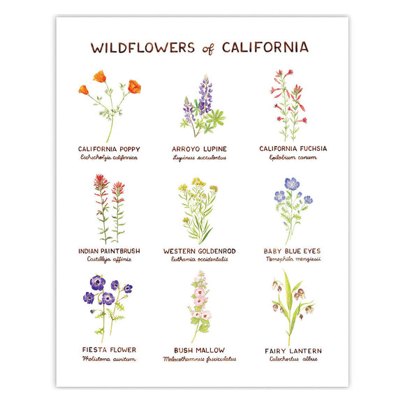 Wildflowers of California Art Print from Yardia - watercolor illustration chart of flower varieties