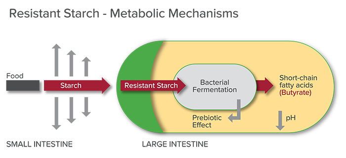 Resistant Starches: What Are They & Why Eat Them?