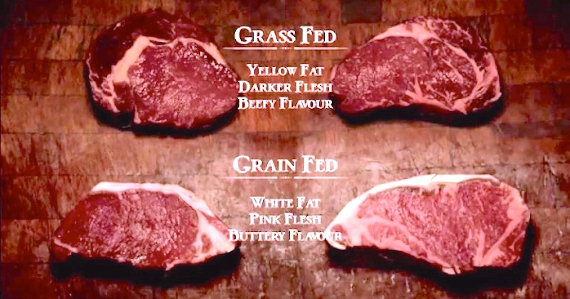 Are Grass-Fed Beef & Other Food Sourcing Considerations A Scam?