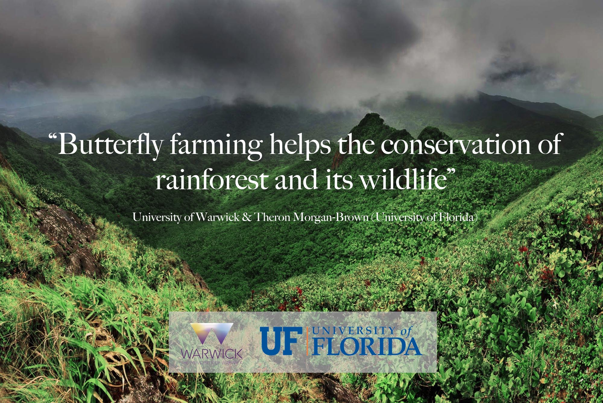 Butterfly farming helps the conservations of rainforest and its wildlife