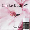 Sunrise Blush (Floral Scent)