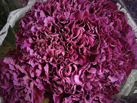 Carnations Fresh Cut Wedding Flowers