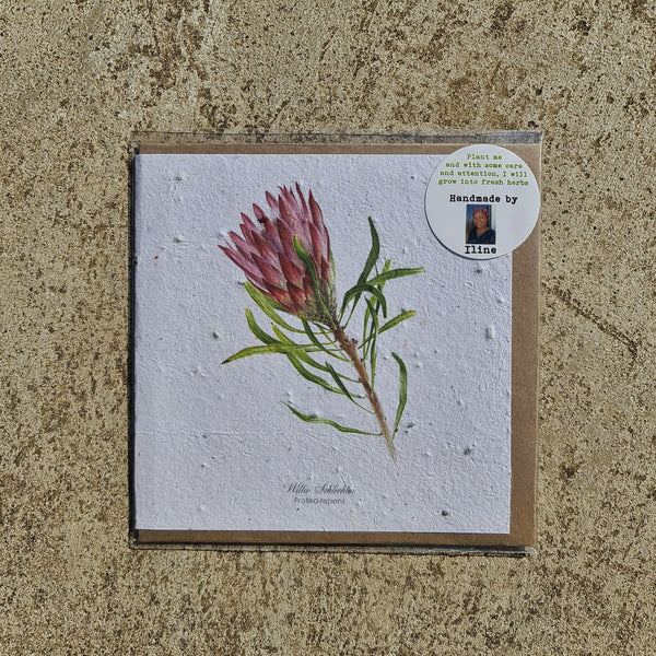 Protea - Growing Paper Greeting Card
