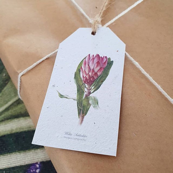 Protea - Growing Paper Gift Tag