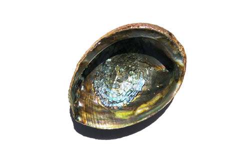 MERMAID ABALONE SHELL