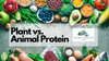 Video - Plant Based Protein Vs. Animal Based Protein - Biochemical Differences in Absorption and Utilization