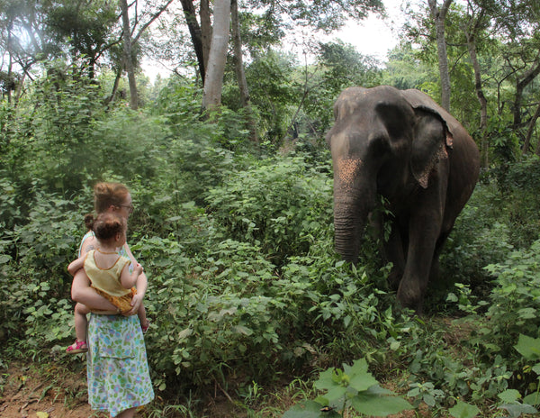 Meeting elephants in Thailand