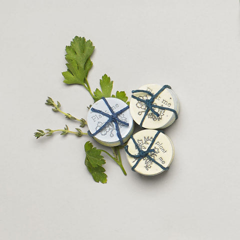Lovewild Design Parsley And Oregano Seed Coins