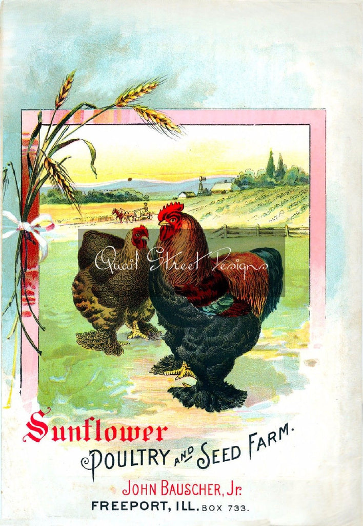 Vintage Seed Catalog - Reprint:  Sunflower Poultry & Seed - 8X10 - Freeport, IL