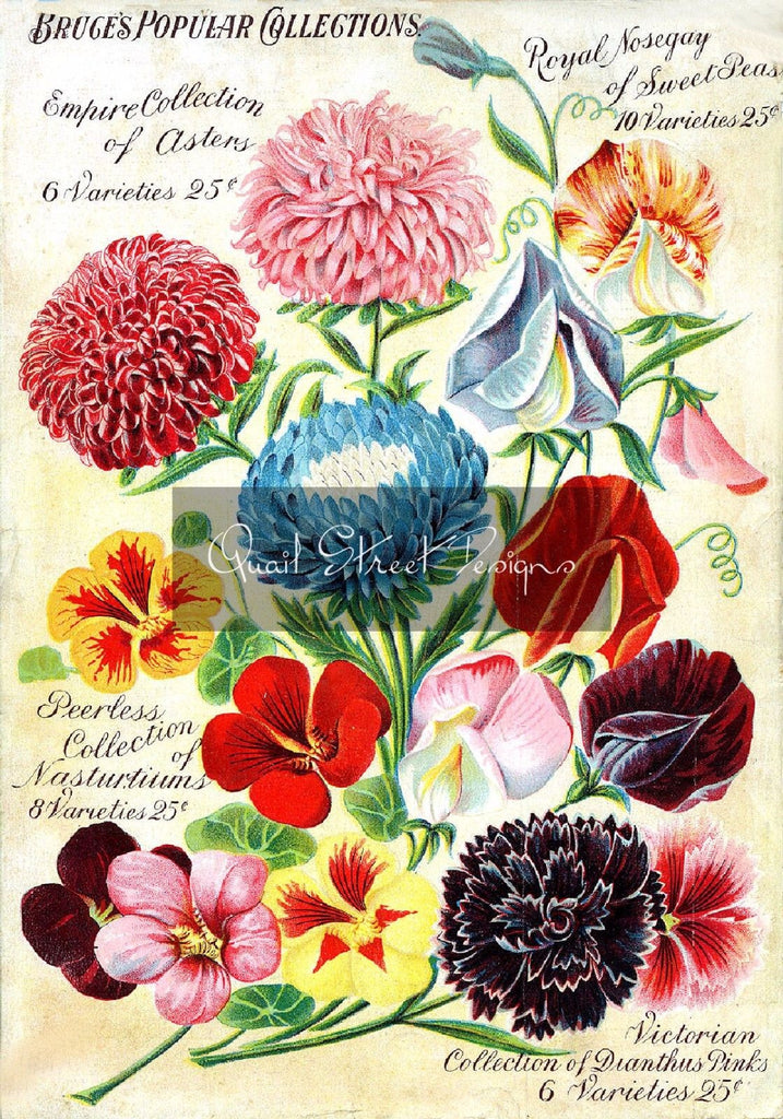 Vintage Seed Catalog Reprint: John Bruce & Company Canada Popular Collect 8X10
