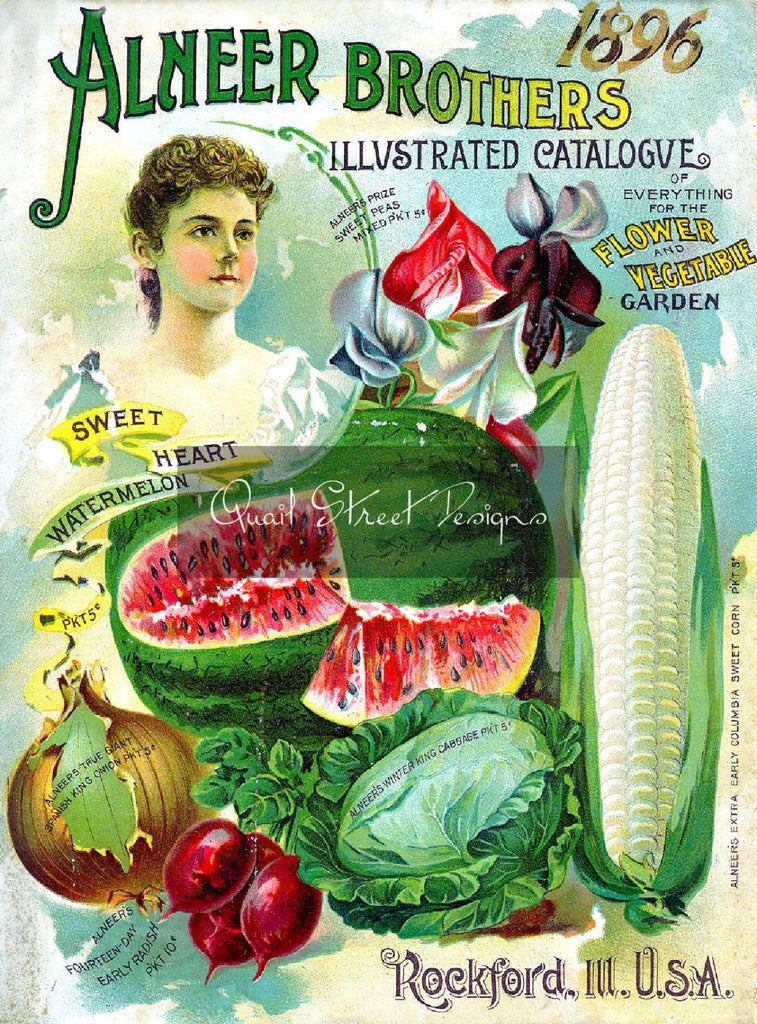 Digital Download - Vintage Seed Catalog - Alneer Brothers 1896 Plant & Seed Catalog  QSDP-6