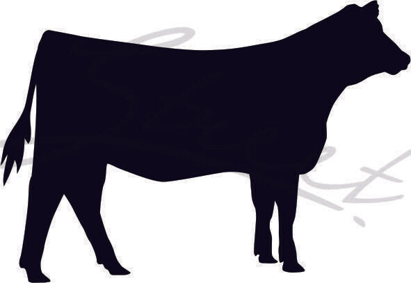 Heifer Cow - Vinyl Decal Free Shipping #1305