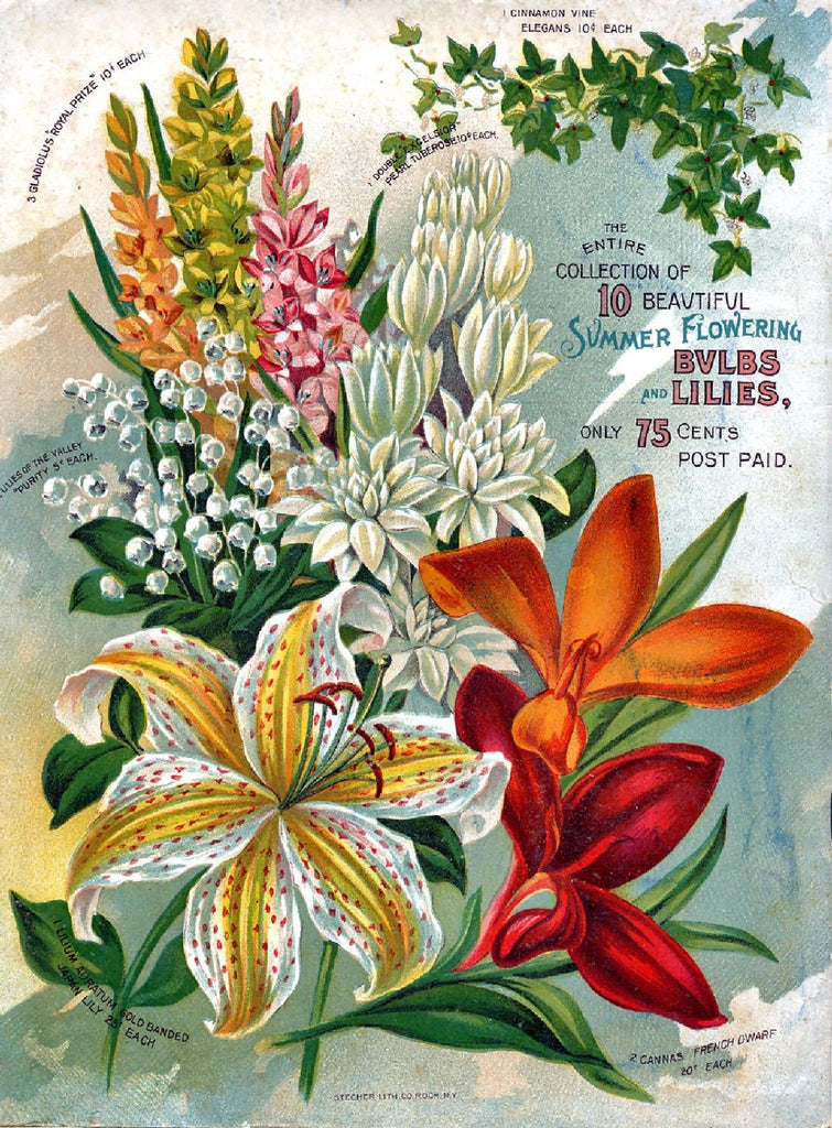 Vintage Seed Catalog - Reprint:  Alneer Floral Back Plant & Seed Guide 8X10