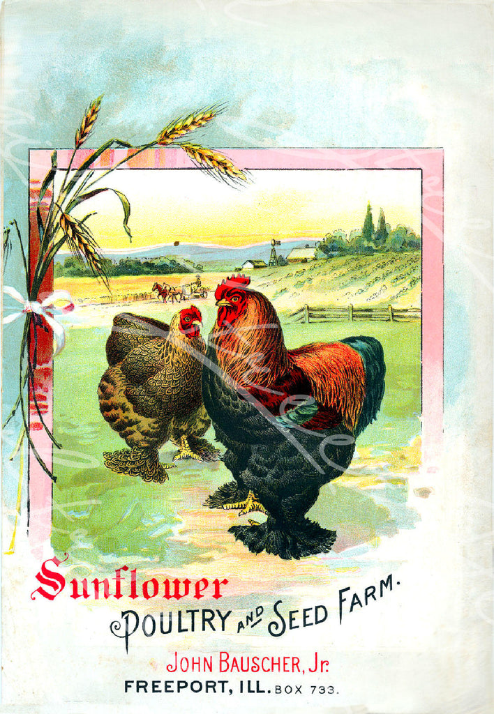 Vintage Seed Catalog - Reprint: Front Cover of Sunflower Poultry & Seed Farm, Freeport, ILL Plant & Seed Catalog   8X10 Print  QSDP-19