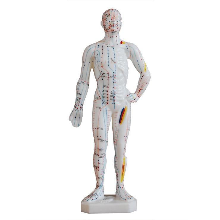 "Acupuncture Model Of Human Body 10"" /M-25"