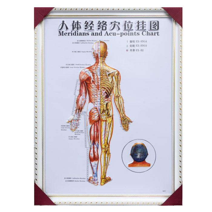 G-01A1 Framed Chinese Acupuncture and Meridians Chart - Acubest