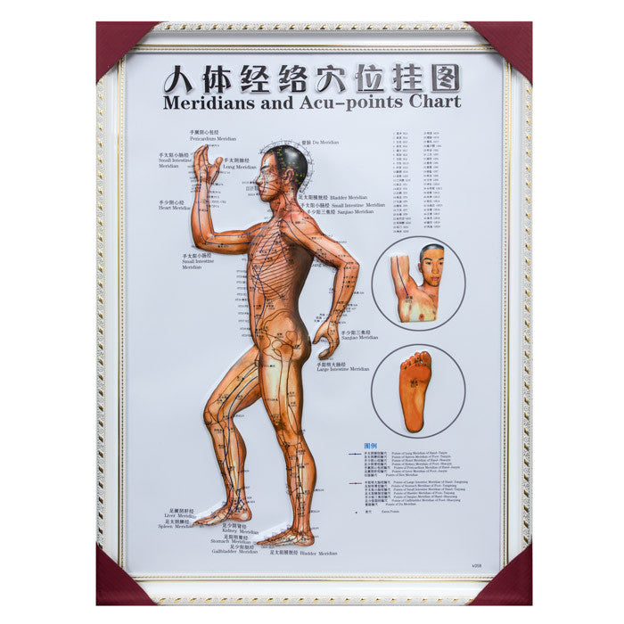 G-01A2 Framed Chinese Acupuncture and Meridians Chart - Acubest