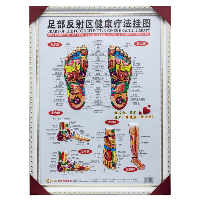 G-01A3 Framed Foot Reflexology Chart - Acubest