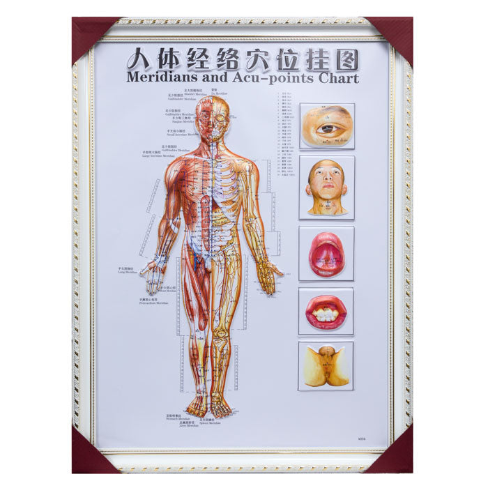G-01A Framed Chinese Acupuncture and Meridians Chart - Acubest