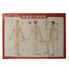 Acupuncture Body Chart / G-02A1