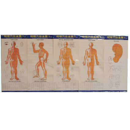 G-02A Acupuncture Body Chart