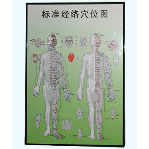 G-06A4 Acupuncture Body Chart