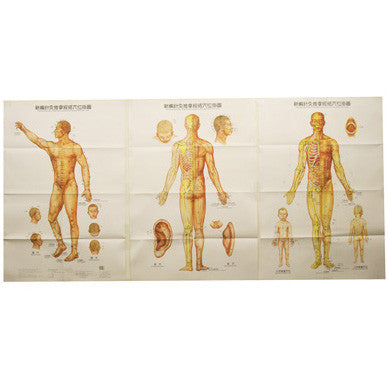 G-02 Acupuncture Body Chart